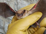 A community comes together during the season of giving to help stranded Big Brown Bats