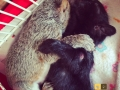 2014-05-12 Easter Grey Squirrels FB size