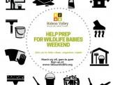 Help Prep for Wildlife Baby Season